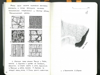 texture page 56 copy_small