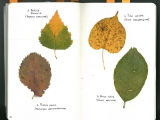leaves page 64_2 small